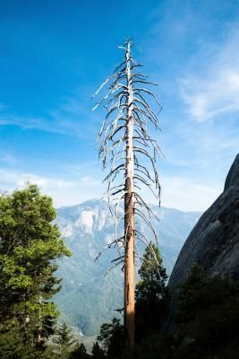 How To Tell If An Evergreen Tree Is Dead Ehow Com Evergreen Trees Evergreen Tree