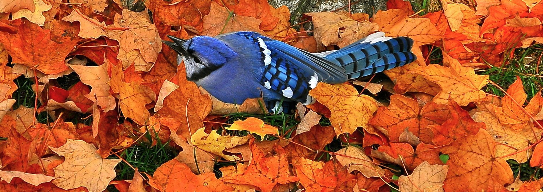Uncategorized What Colour Contrasts With Blue the color contrast is awesome colour bird and animal awesome