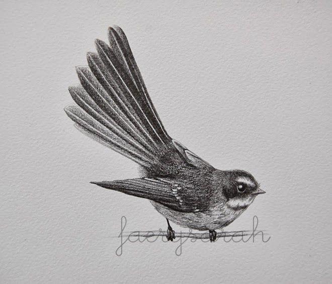 Faerysarah Hello Li L Fantail Sketch Faerysarah Sketch Fantail Pencil Gift Bird Drawing Nature Illustration Bird Illustration Leaf Art