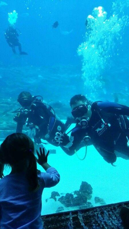 Diving In The Georgia Aquarium Georgia Aquarium Diving Scuba Diving
