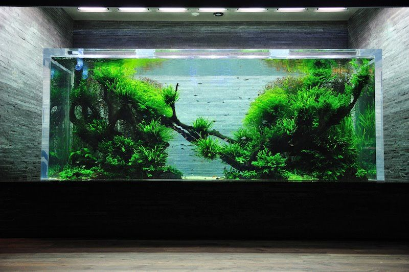 Ada tank sumida aquarium tokyo the green world in the for Ada fish tank
