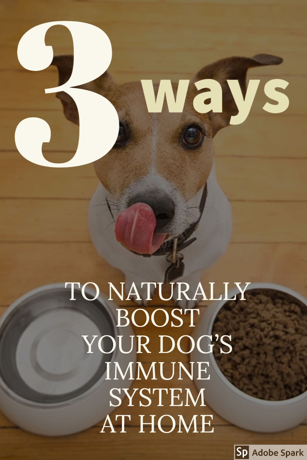 3 Ways To Naturally Boost Your Dog S Immune System At Home In 2020 Immune System Boost Immune System Your Dog