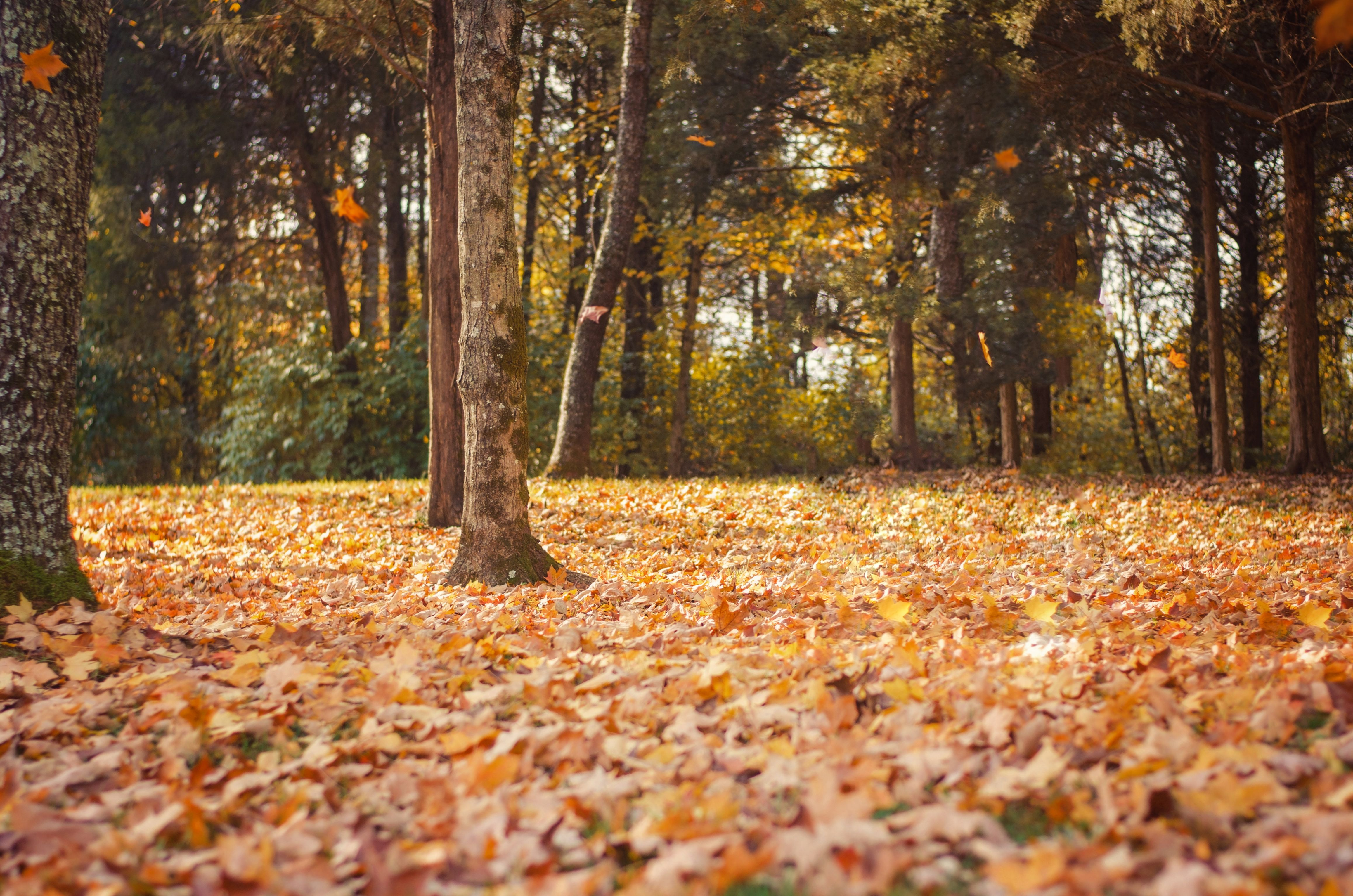 FREE Fall Digital Background For Photography