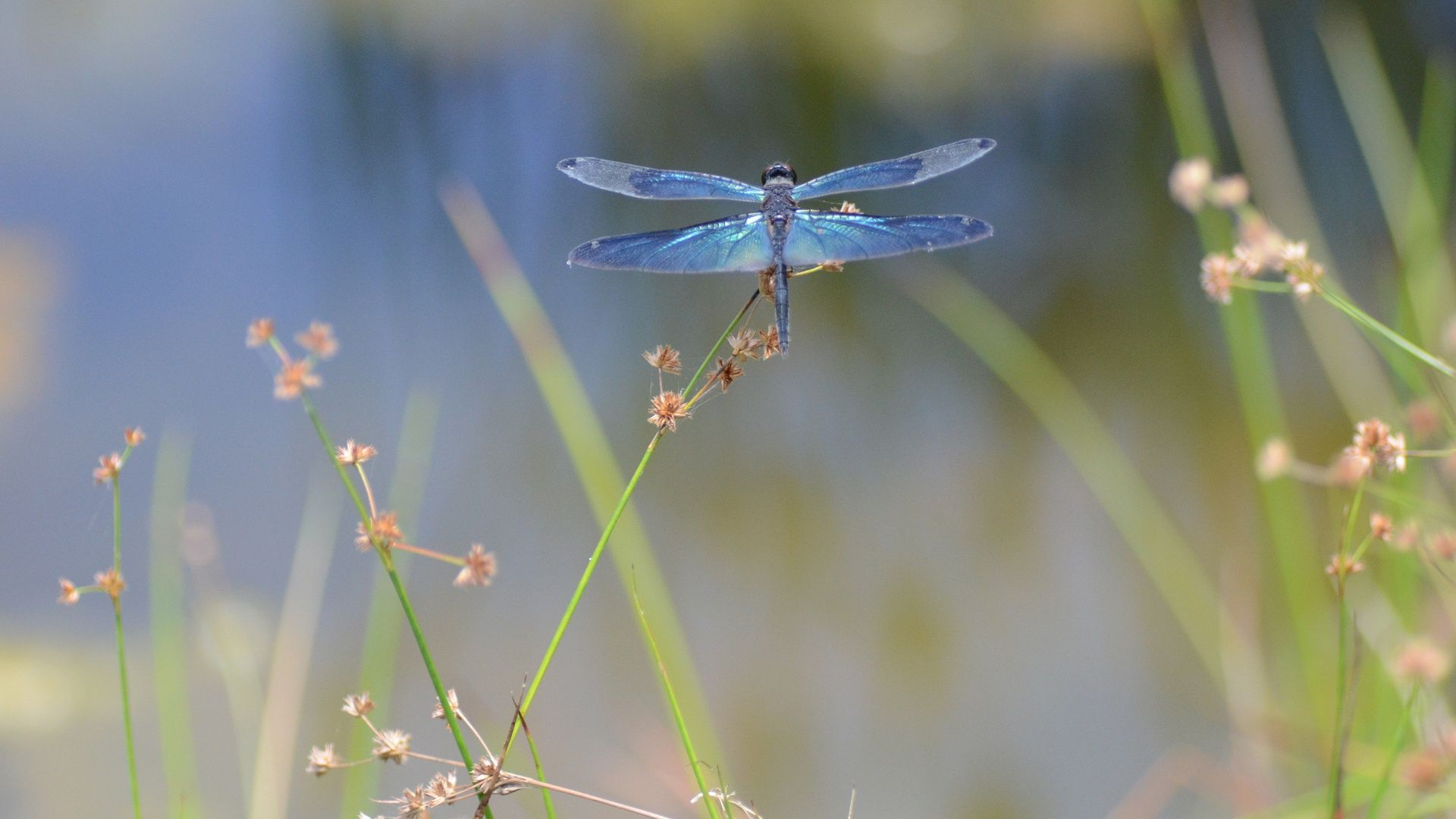 Dragonfly Images Best Dragonfly Wallpapers In High Quality 1024 640 Dragonfly Backgrounds 32 Wallp Dragonfly Photography Dragonfly Images Dragonfly Wallpaper