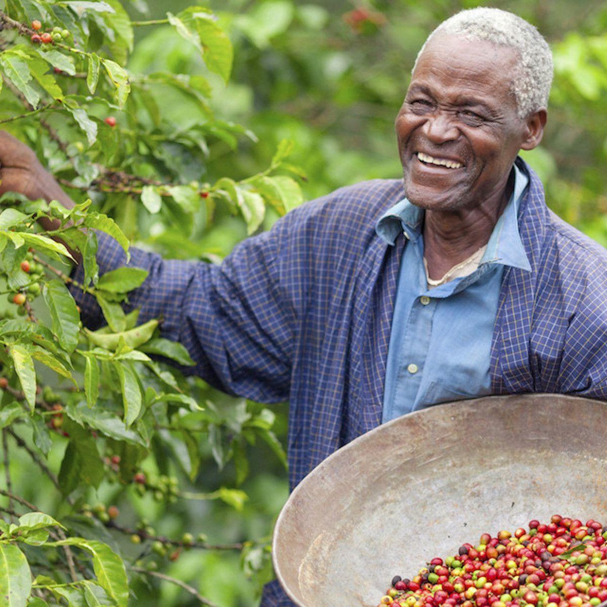 Ethiopian yirgacheffe ethiopian yirgacheffe investing