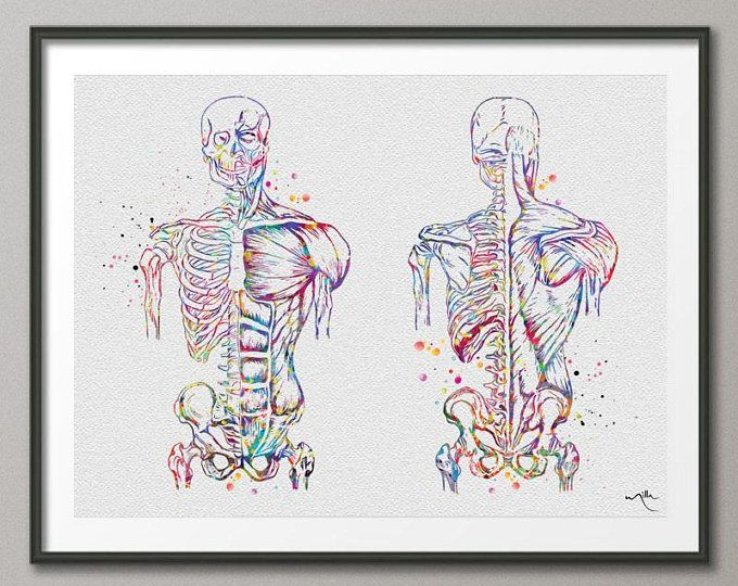 Muscular System Watercolor Print Anatomy Art Human Muscles Medical