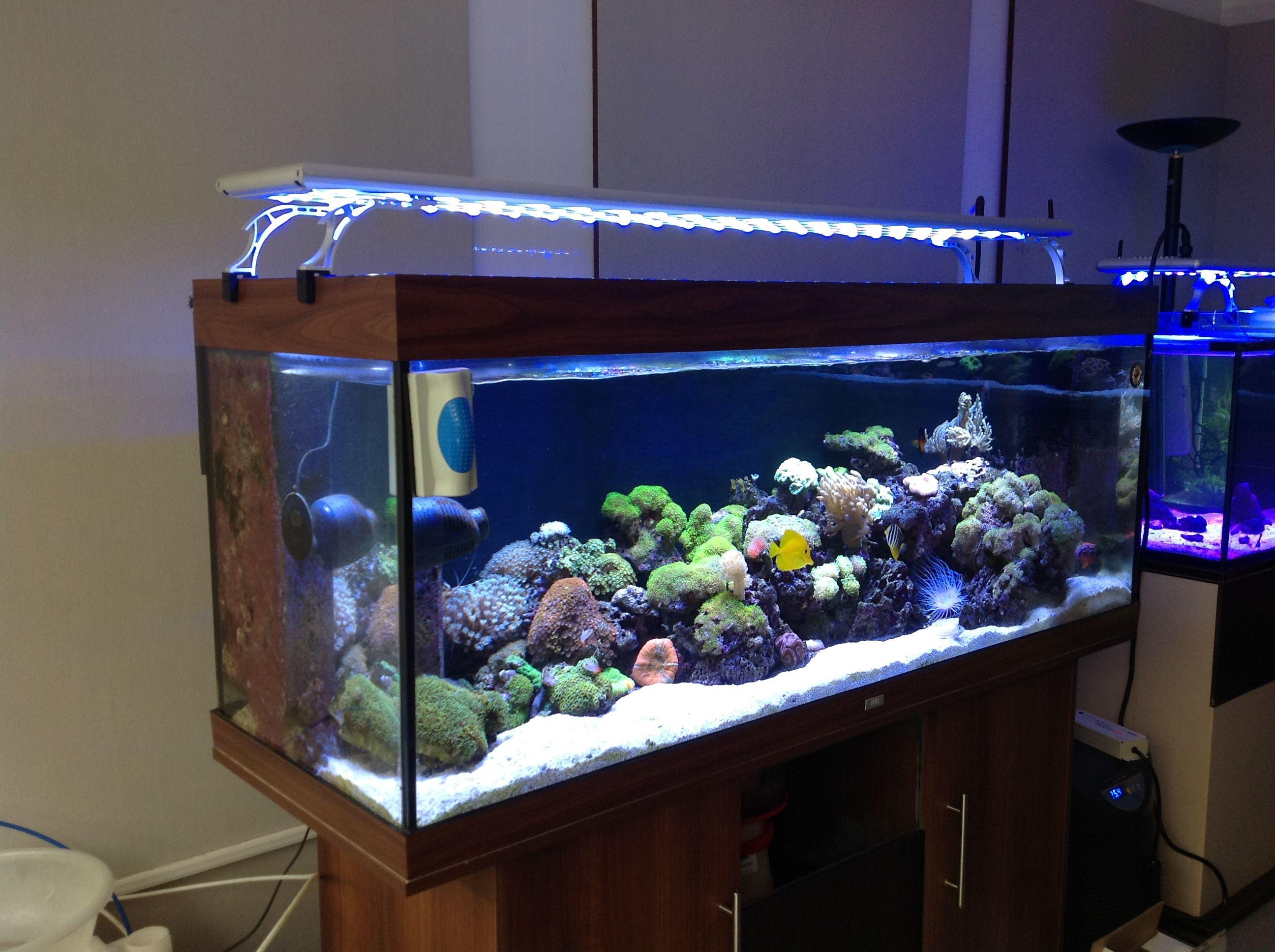 ideas meganraley hanging light aquarium diy kit stand
