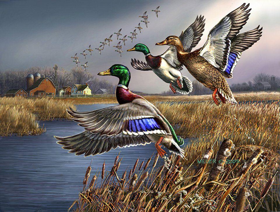 Pin de Nathan Sowers en paintings | Pinterest | Patos, Pájaro y Cisnes