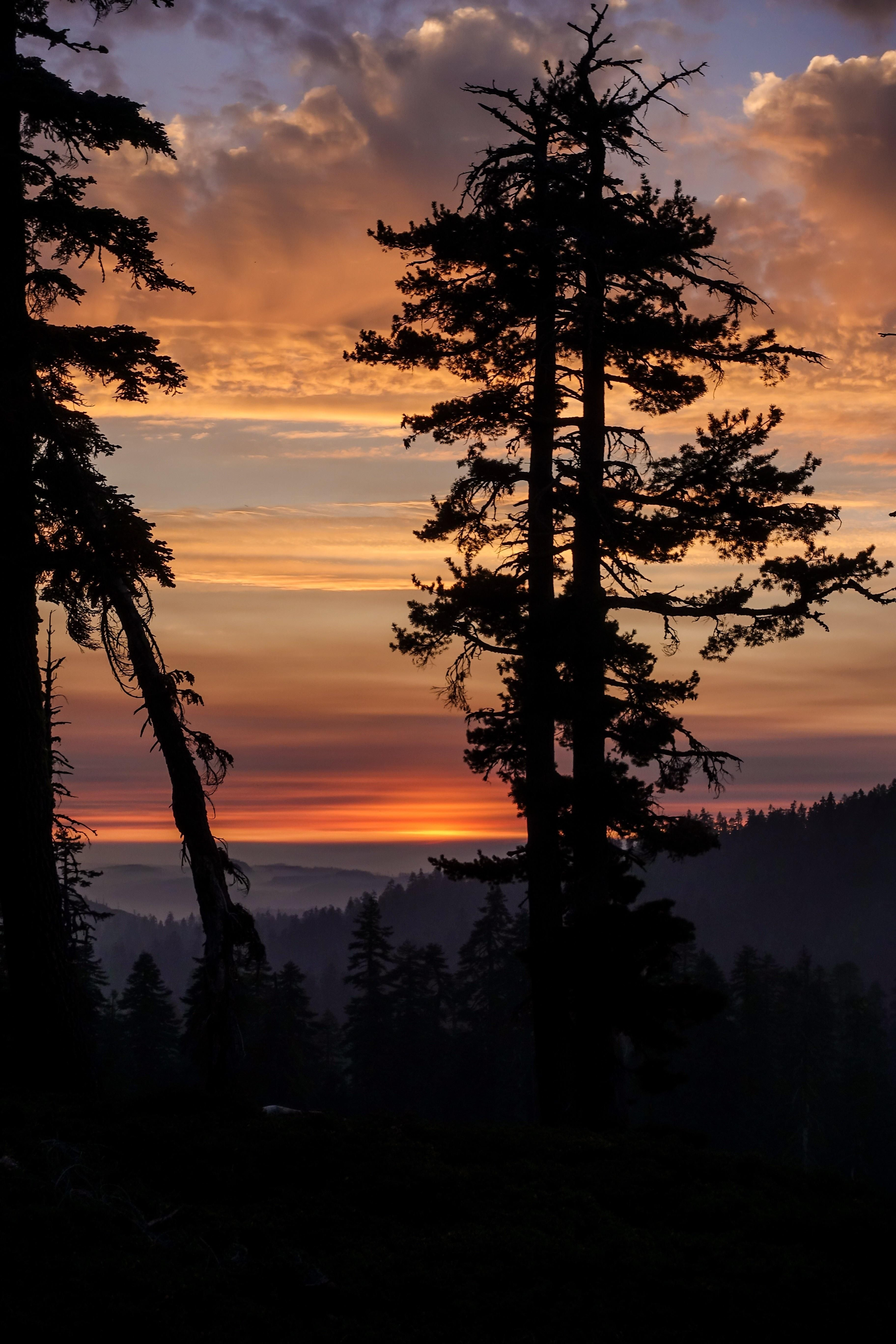 Sunset Silhouette In Tahoe National Forest Oc 3648x5472 Sunset Painting Forest Sunset Sunset Silhouette