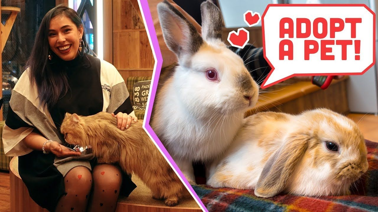 Hedgehog, Bunny & Cat Cafes from Japan! National Adopt A