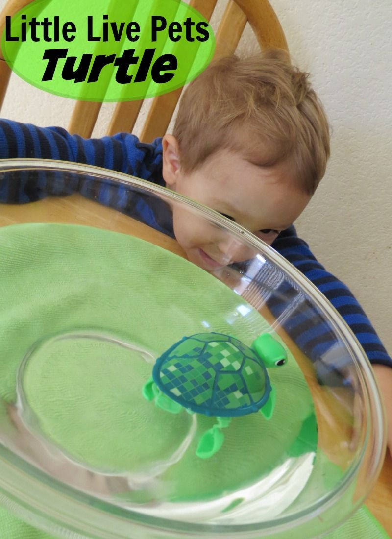 Tyler LOVES the Little Live Pets Turtle Toy Toys, The o