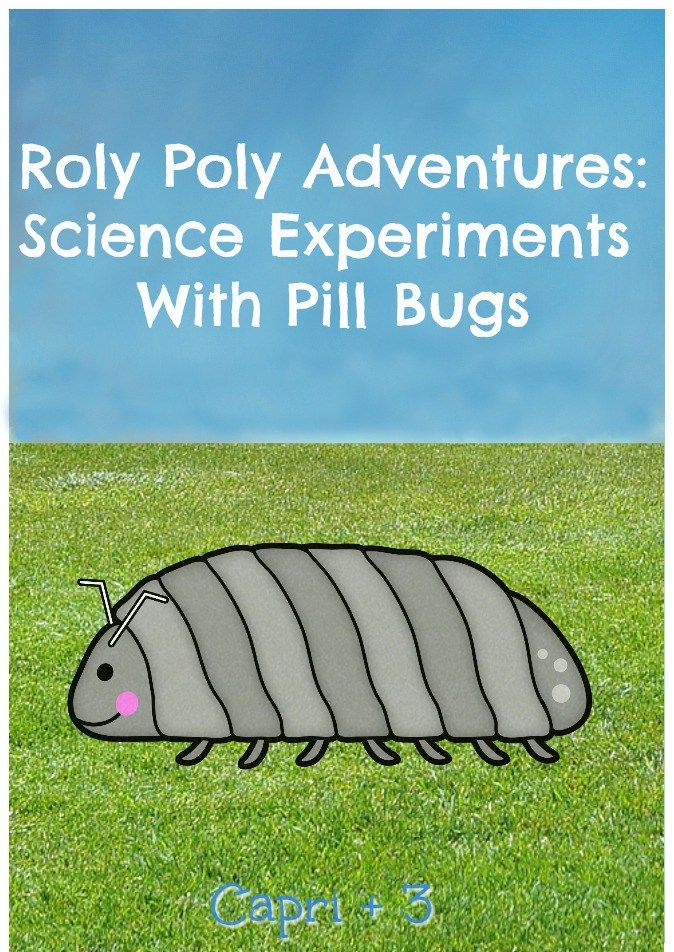 Roly Poly Adventures Simple Science Experiments With Pill Bugs