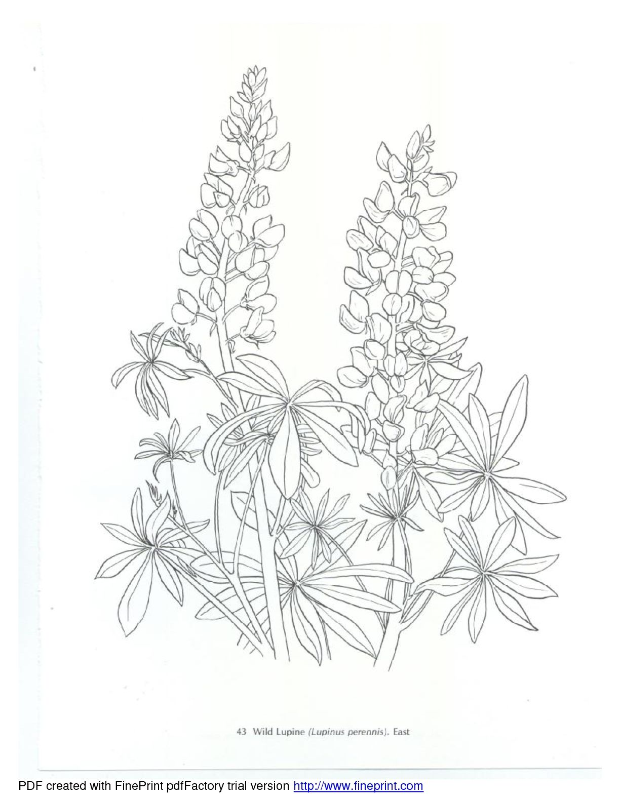 American wild flowers quilling embroidery pattern pinterest