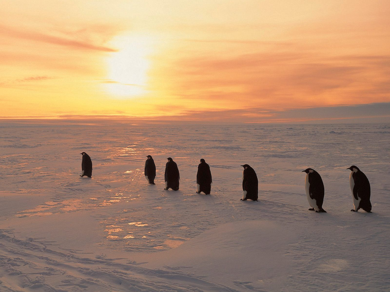 Antarctica Animals om animalspicturesnature emperor