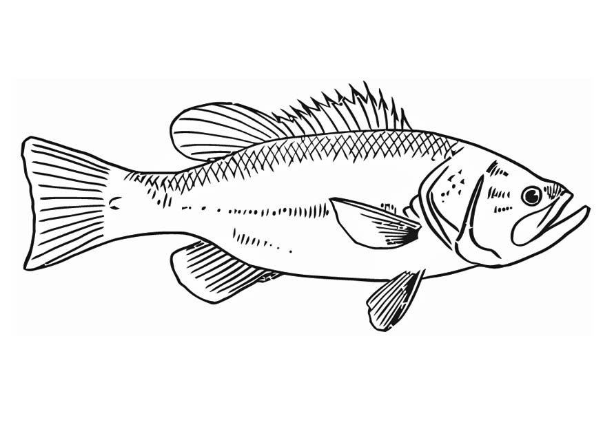 Coloring Page Fish Fish Coloring Page Coloring Pages Fish Artwork