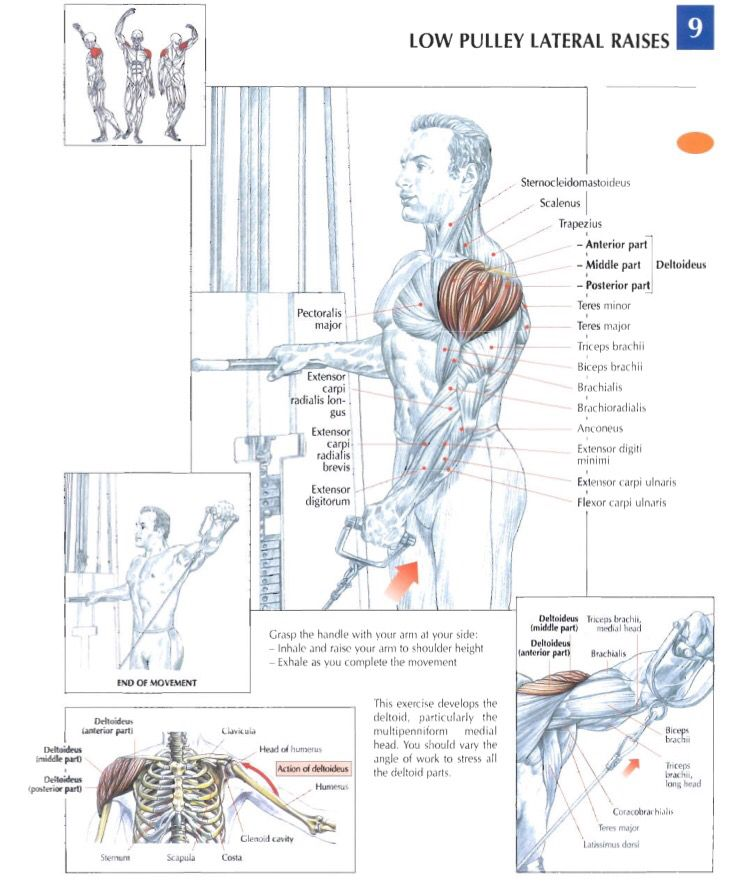 Low pulley lateral raises (one hand) | Health and Fitness ...