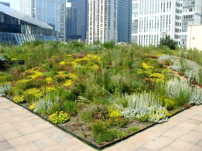 Chicago City Hall Greenroofs Com Roof Garden Design Green Roof Garden Roof Garden