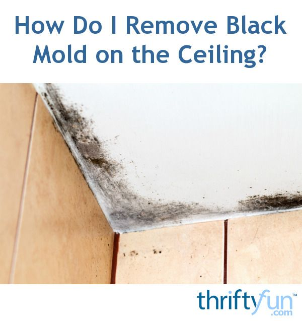 How Do I Remove Black Mold on the Ceiling? Pinterest Mold