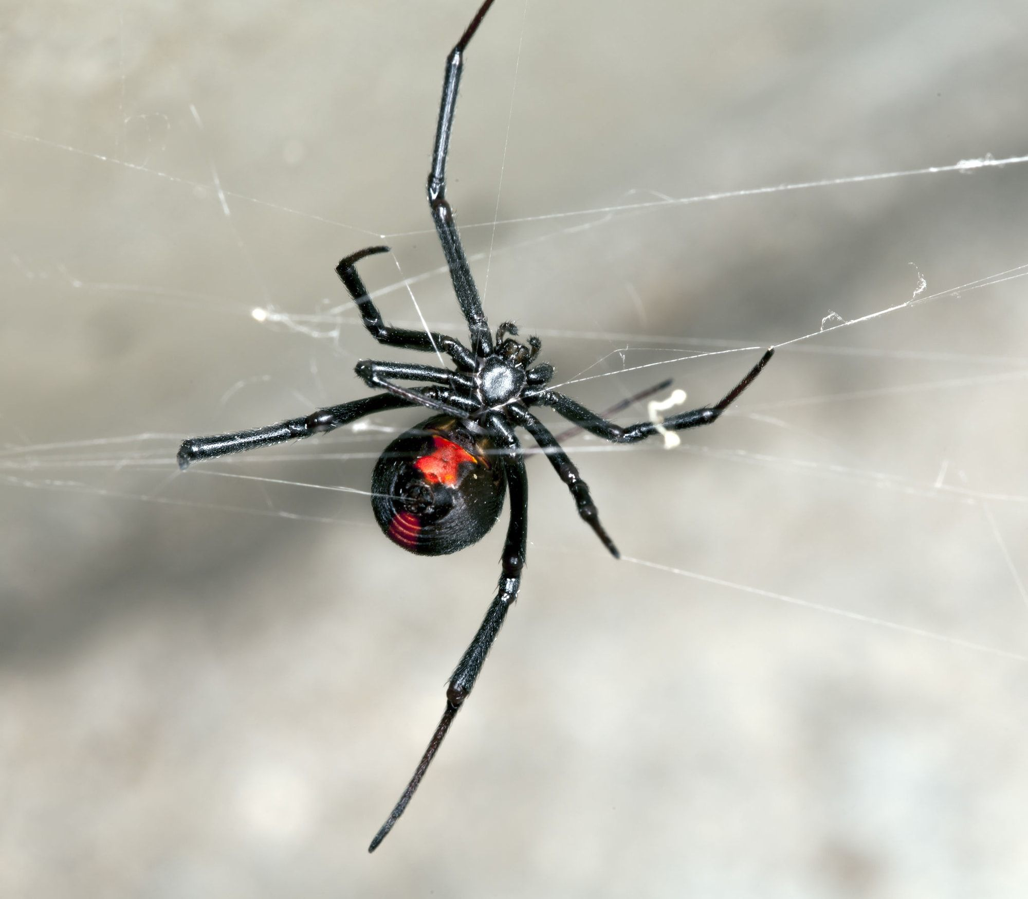 DidYouKnow a spider would usually rather play dead than bite you if ...