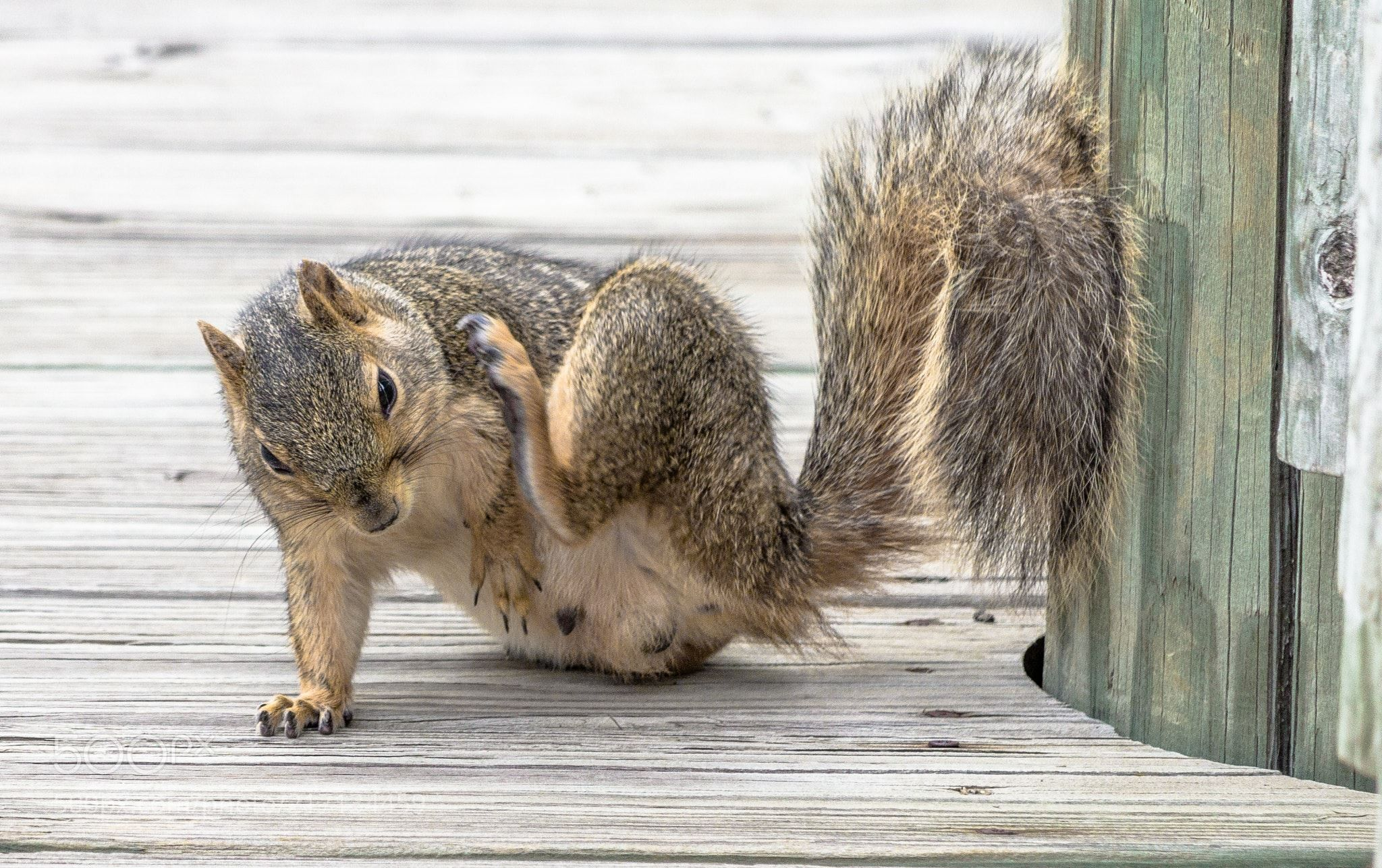 Scratch that itch! (Michael Oimoen / Sioux Falls / USA) #Canon EOS ...