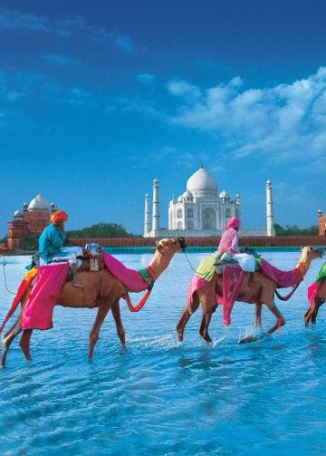 Camels in front of the Taj Mahal, India.