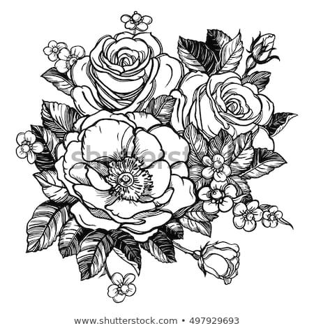 Floral Highly Detailed Hand Drawn Rose Flower Stem With Roses And