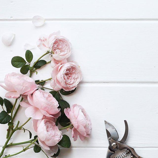 Pin By Om7mody On Labels Instagram Wallpaper Flower Background Wallpaper Framed Wallpaper
