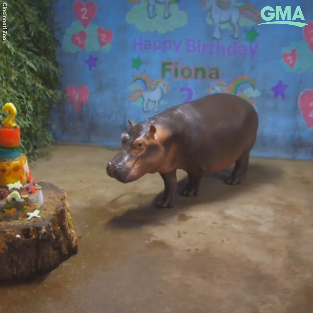 Happy National Hippo Day!