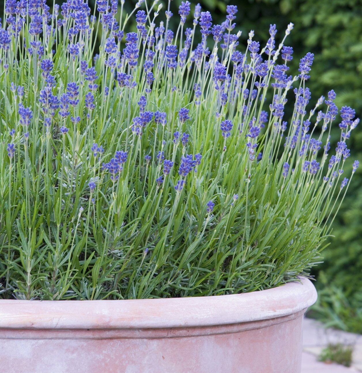 8 Plants That Repel Bugs and Mosquitoes in 2020 Plants