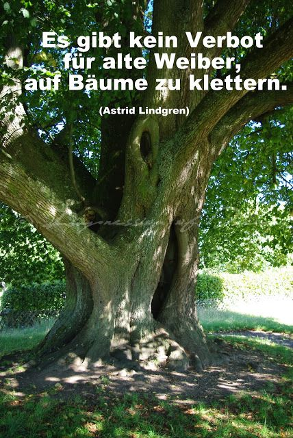 Es Gibt Kein Verbot Fur Alte Weiber Auf Baume Zu Klettern