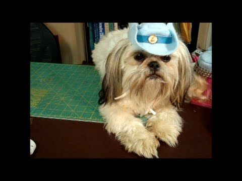 7cc003db3f7 Make Dog Visor Hat-Cap-DIY Dog Food Groom Clothes - a tutorial by Cooking  For Dogs - YouTube