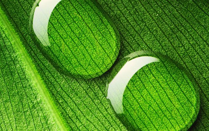 Scarica Sfondi Gocce Dacqua Verde Foglia I Concetti Di Ecologia