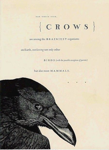 The Cherokees believe that crows represent intuition and that they are messengers of the Great Spirit.   I love crows. We have a lot them around here.