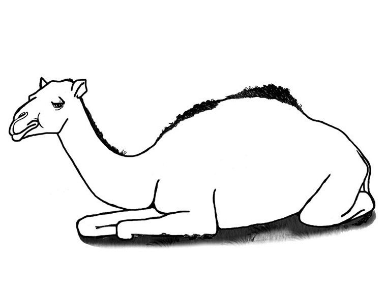 Medium Camels Sitting Coloring Pages For Kids Xi Printable Camels Coloring Pages For Kids