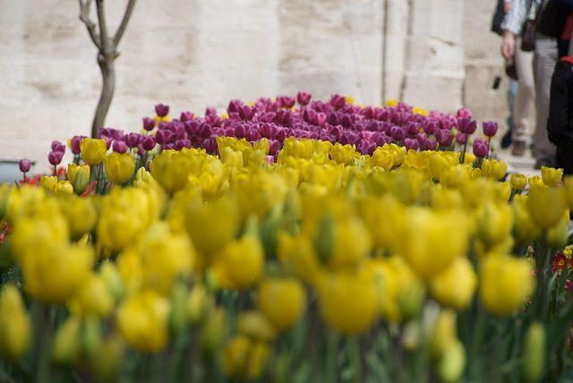 Tulipanes by esti-, via Flickr