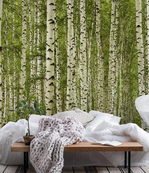 Birch trees wall mural from happywall trees mural green