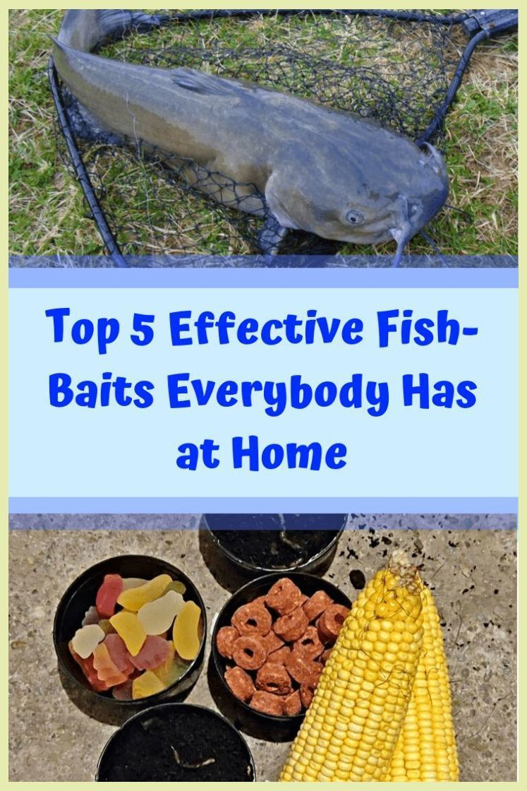 Top 5 Effective Fish-Baits Everybody Has at Home | Big Traps At Home | Gym workouts |  Trap W... #trapsworkout Top 5 Effective Fish-Baits Everybody Has at Home | Big Traps At Home | Gym workouts |  Trap Workout Music . #fit #C #trapsworkout