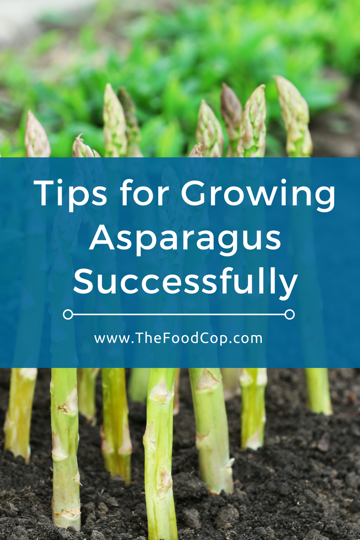 Tips for Growing Asparagus Successfully | gardening | Pinterest ...