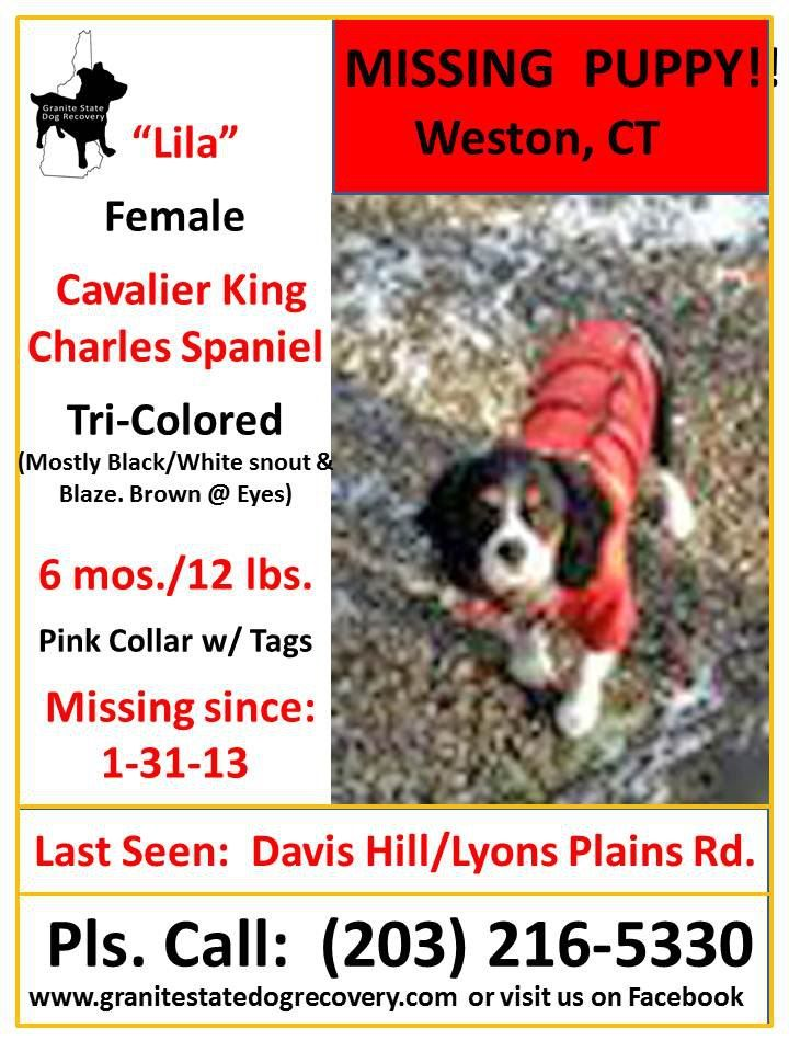 Missing Female Cavalier Spaniel Puppy Weston Ct 1 31 13 Lila Is 6 Mos 12 Lbs Tri Colored She Is Primarily Bla Pink Collars Losing A Dog Police Canine