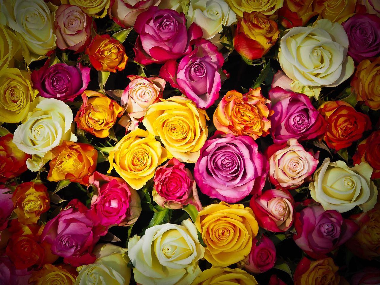 Roses and flowers dream interpretation dream power pinterest roses and flowers dream interpretation mightylinksfo