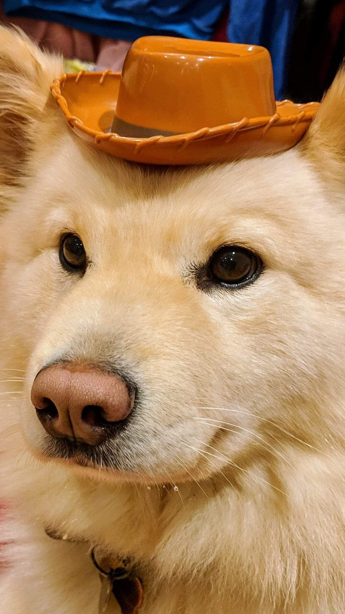 I wish i looked as good in hats as my dog does yeehaw