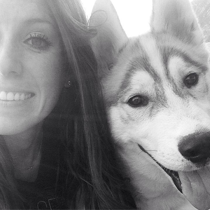 My Beautiful Smiling Siberian Husky Puppy Kato Siberian Husky