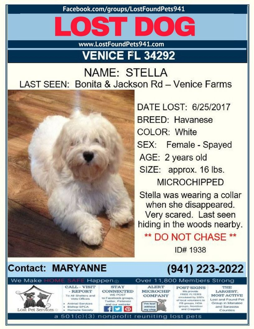 Have You Seen Stella Losing A Dog Havanese Bichon Frise