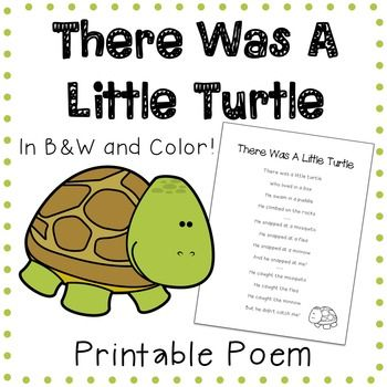 There Was A Little Turtle / The Little Turtle worksheet - Free ESL printable ... - Who lived in a box.
