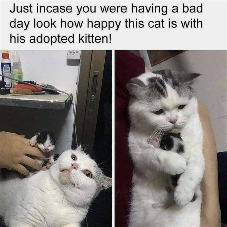 Kittens Animals Funny Memes Funny Spanish Memes Funny Cat Memes