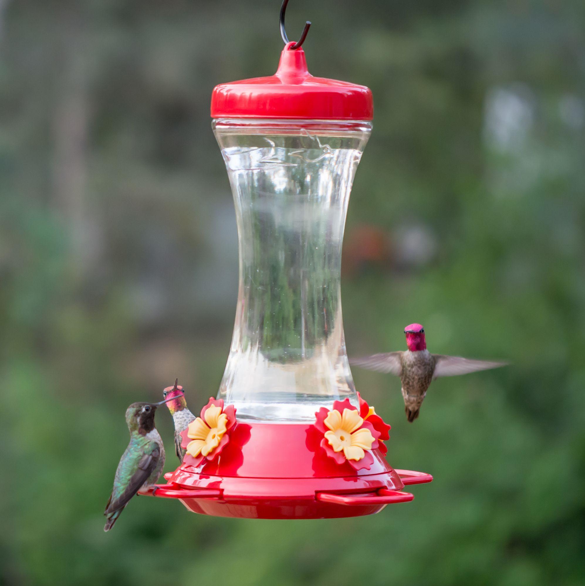 Adjustable Perch Glass Hummingbird Feeder 20 oz Nectar