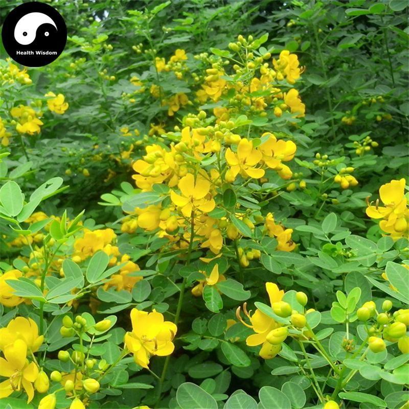 Pin on Plant Medicinal Herbs 中藥材种植 TCM