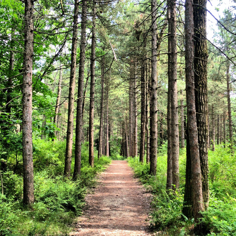 Woodland Dunes Trail At Kohler Andrae >> Kohler Andrae State Park Wi Woodland Dunes Nature Trail The