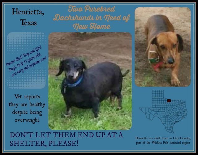 Henrietta Tx No Takers Two Purebred Dachshunds Dachshund Hound Breeds Animal Rescue