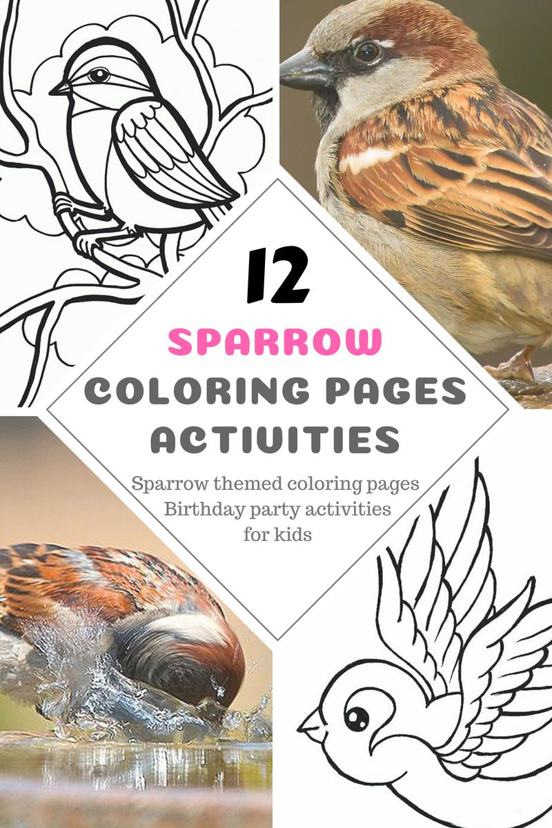12 Sparrow Coloring Pages And Birds Activities For Kids Birthday